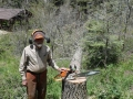 SAM_WITH_FELLED_18_INCH_TREE_WITH_WOOD_GOING_TO_THE_NEEDY_DB-2